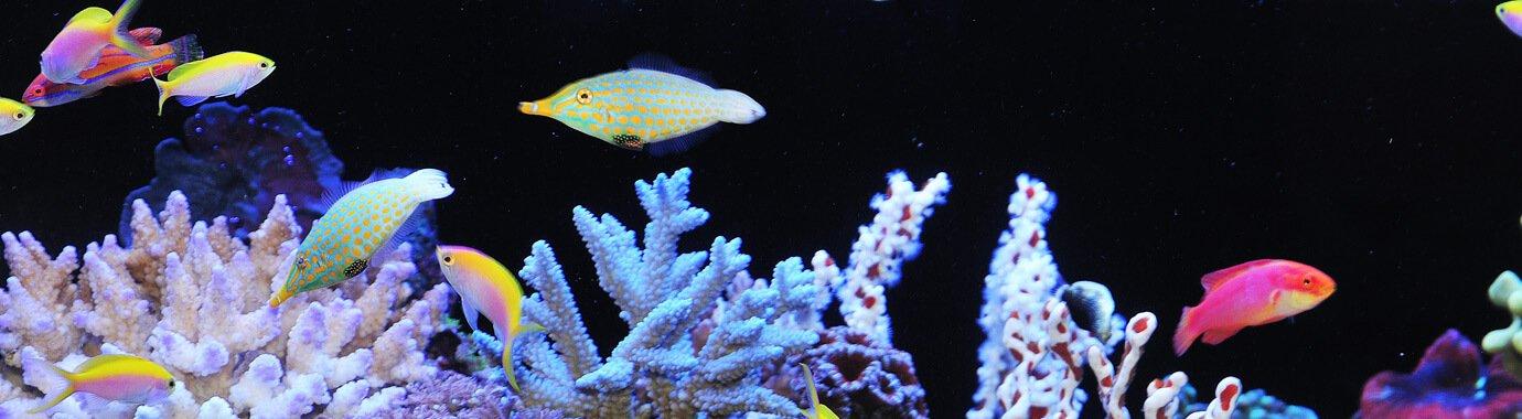 https://aquapremium.com.au/wp-content/uploads/2018/07/marine_buffer_banner.jpg